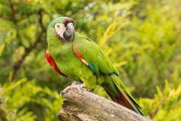 Parrot On Log