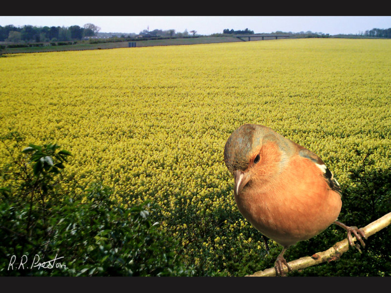 Daffodils with Bird