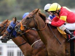 Horse Racing Hamilton Event