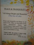 Peace & Tranquility - Sue Webb