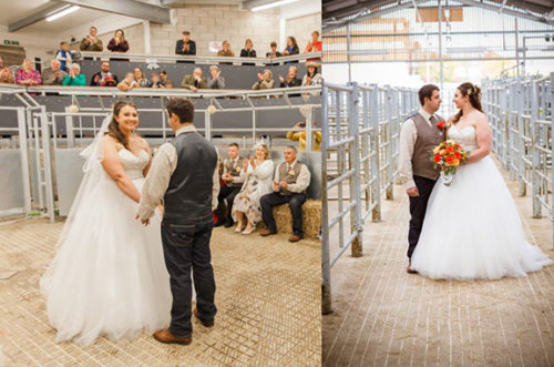 Cattle Market Wedding4