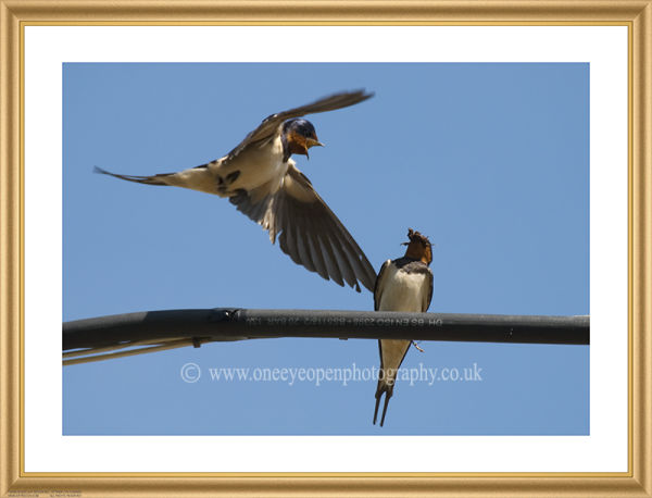 Swallow attack.