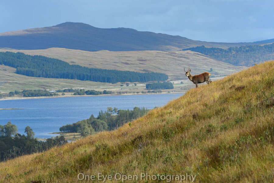 Stag with a view