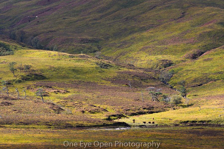 Scottish Highland farm