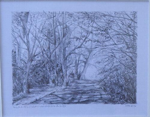 Llanrhian Woodland