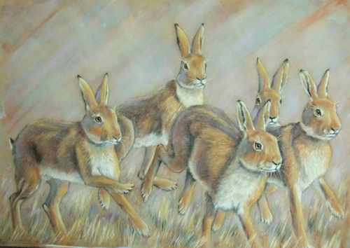 Hares in the Morning
