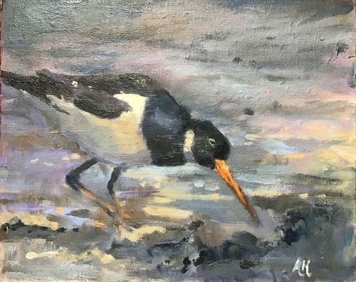 Oystercatcher by Alison Hemingway