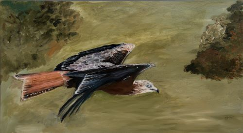 Red Kite by Maggie Humble