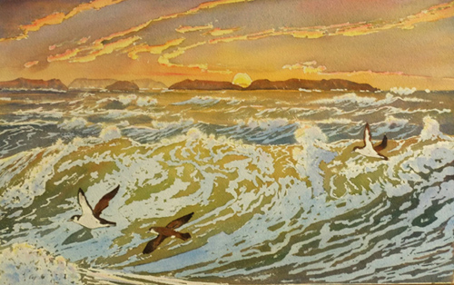 Shearwaters at Sunset
