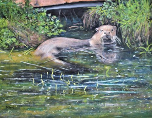 Dog Otter at Roch Mill by David Sims