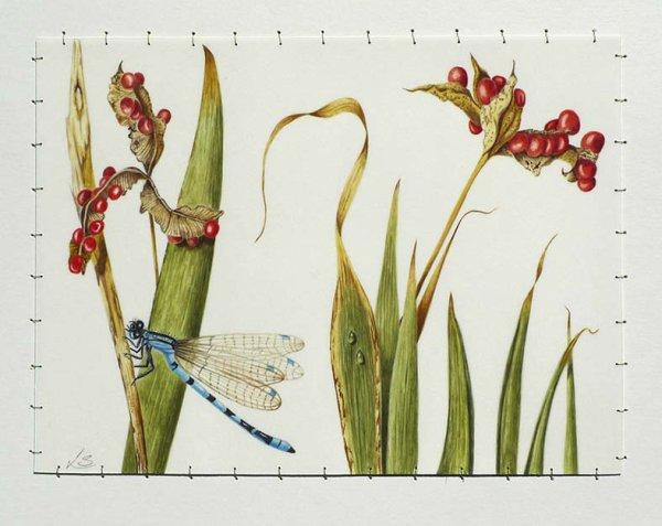 Dragon Fly & Stinking Iris