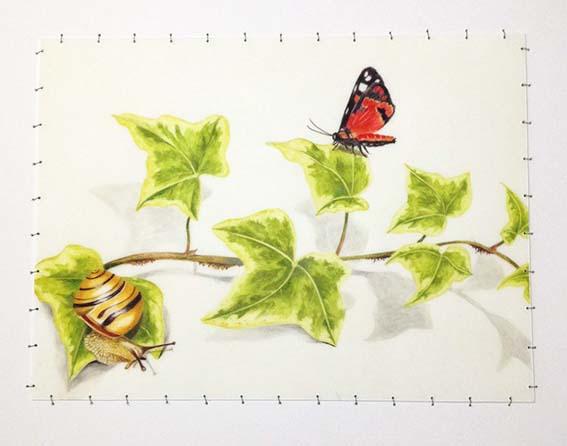 Scarlet Tiger Moth, Snail & Ivy