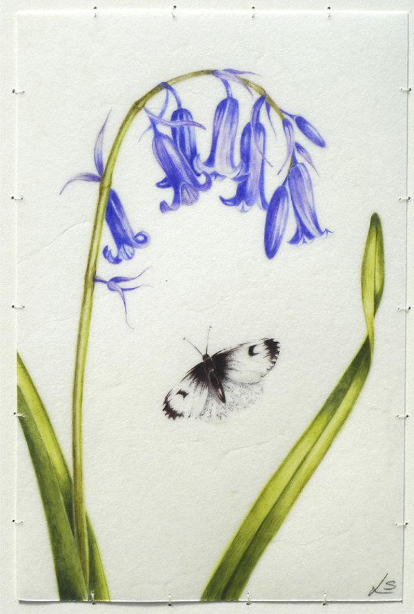 Bluebell & Butterfly
