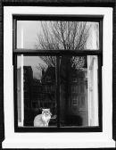 Amsterdam Pussy