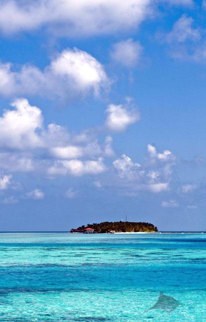 Stingray, Maldives
