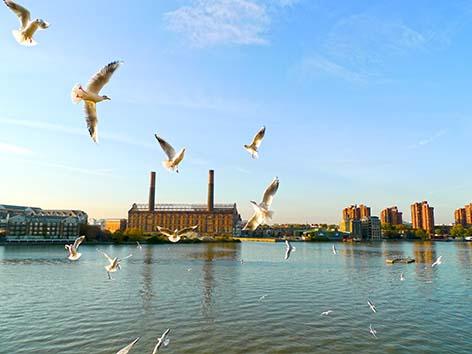 Seagulls, Battersea