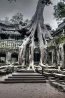 Ta Prohm Temple 5
