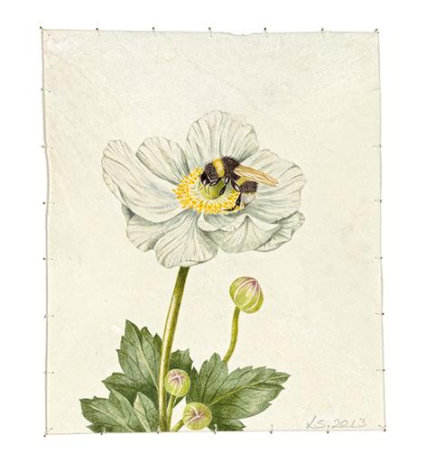 Anemone & Bumble Bee