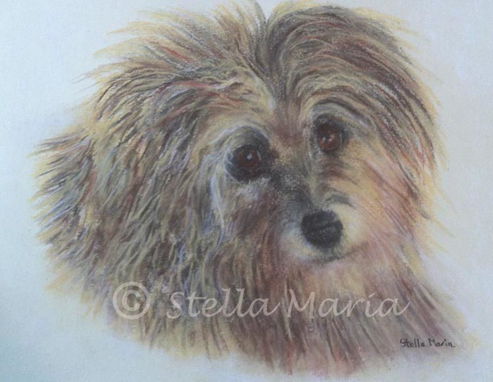 """""""penny a pastel painting by stella maria art solihull"""""""