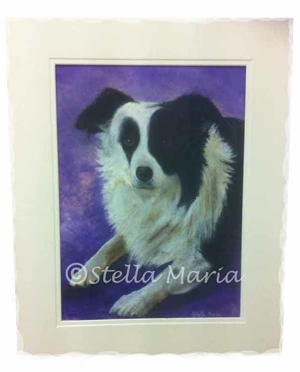 shep our collie dog by stella maria art solihull