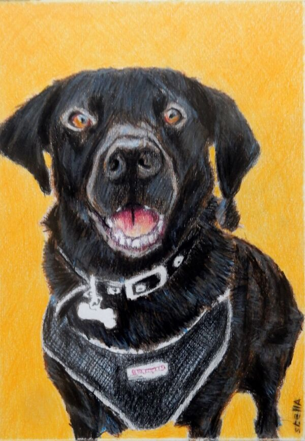 Daisy the labrador pet portrait COMMISSION by Stella Tooth