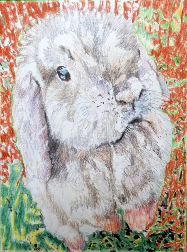 Dexter the lop-eared rabbit pet portrait COMMISSION by Stella Tooth