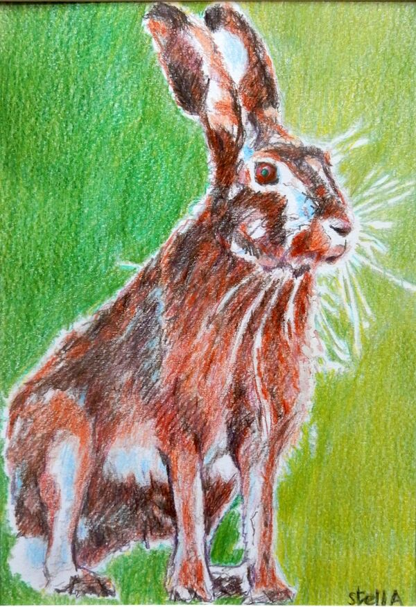 Harold hare animal drawing by Stella Tooth