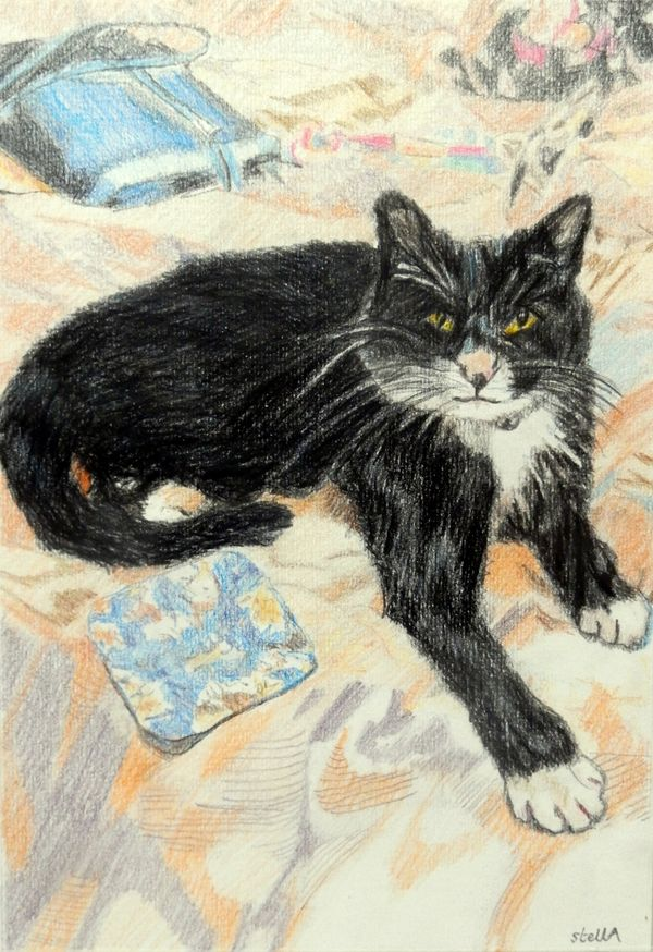 Polly the cat pet portrait by Stella Tooth