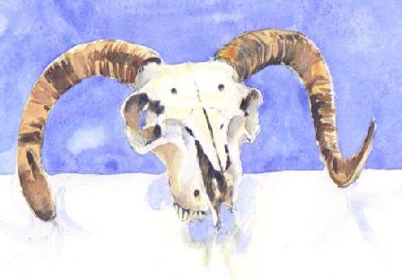 Skull still, lifeless - sold