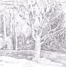 Westonbirt shadows - sold