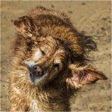The Old Sea Dog