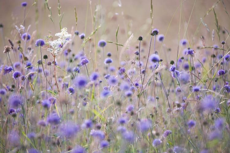 Summer meadow Clattinger Farm
