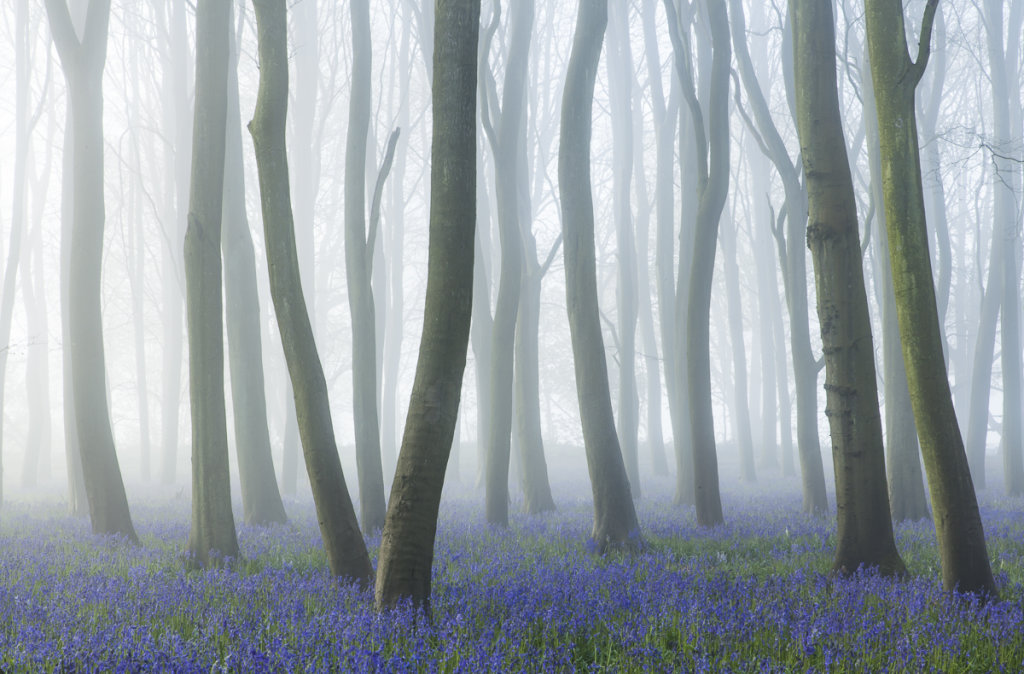 Bluebell mists