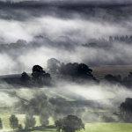 Lone Tree mists
