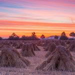 Sunrise Corn Stooks Pewsey Vale