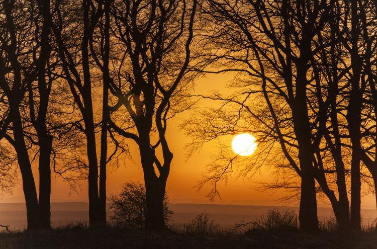 Wiinter Sunrise Salisbury Plain