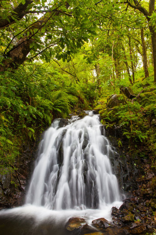 Tom Gill Lake District