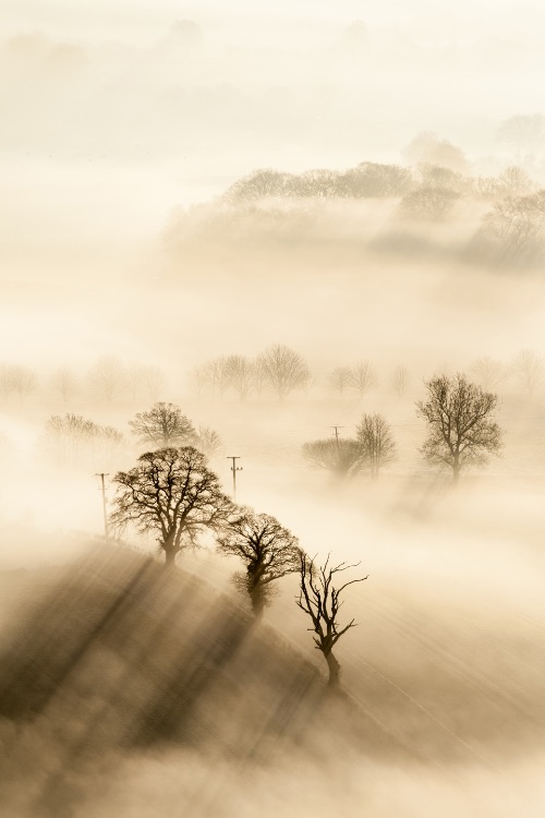 Trees and mist Pewsey Vale