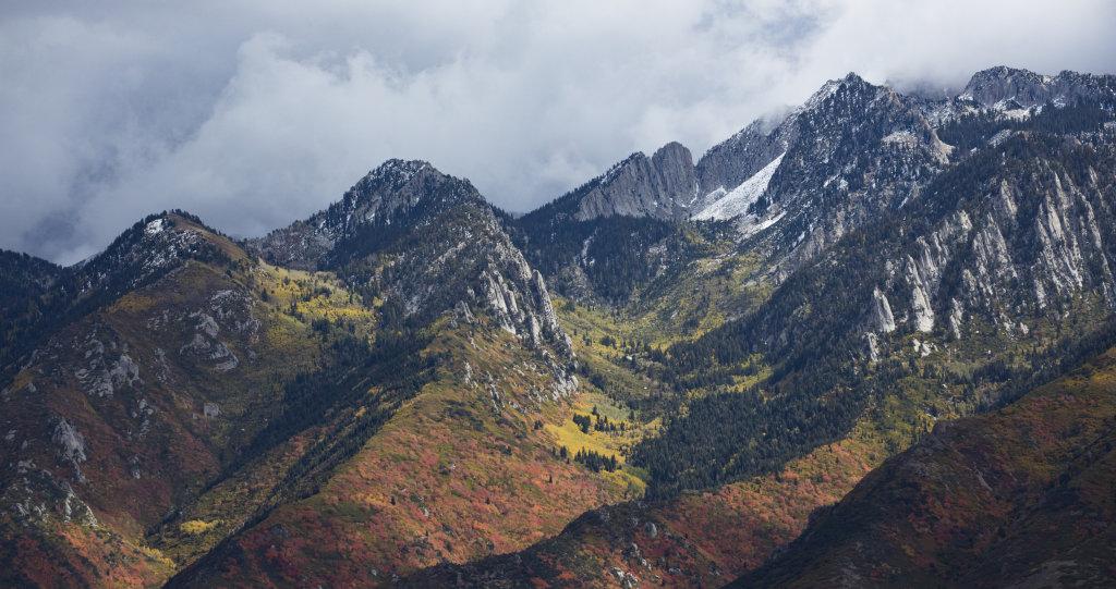 Mountain Maples Colorado USA