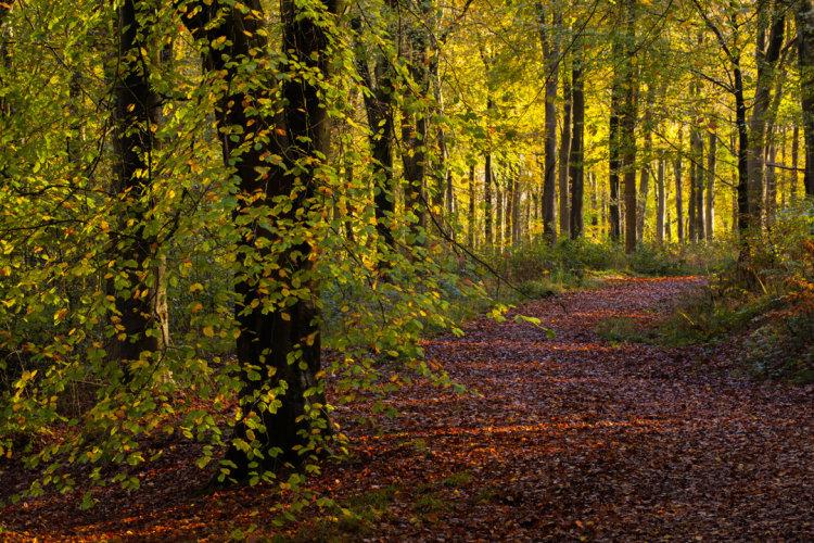 Autumn Path West Woods