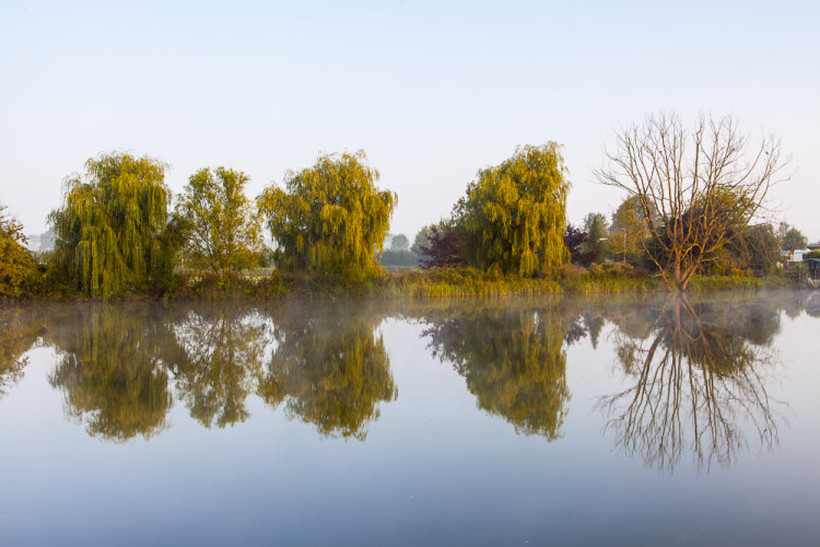 Willows reflection