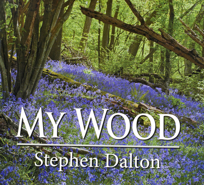 My Wood by Stephen Dalton