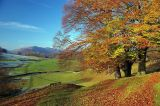Autumn under Loughrigg