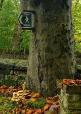 This way for the Mushrooms!
