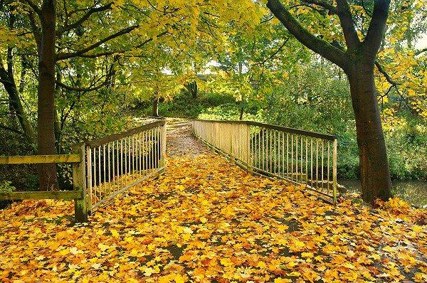 Autumn in Queen's Park