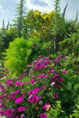 Sub Tropical Plants