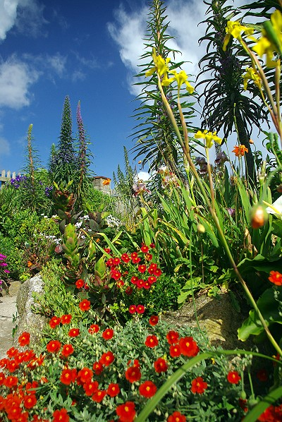 The gardens of the Minack Theatre
