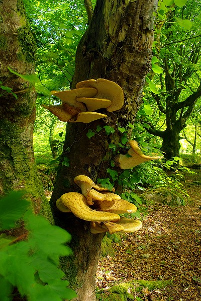 Bracket Fungus (from the other side)