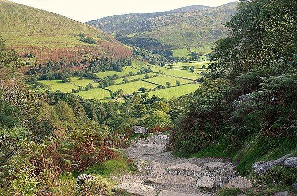 Woodland Descent