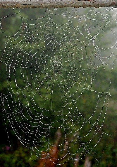 They spun a web for me.